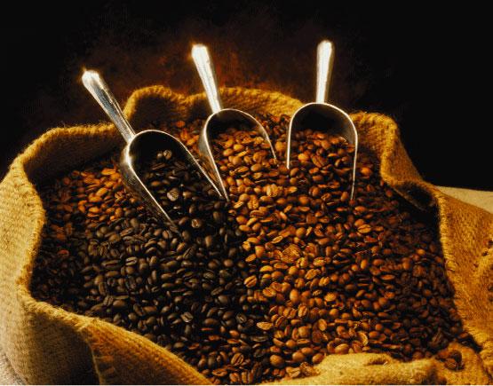 CAFE-RD